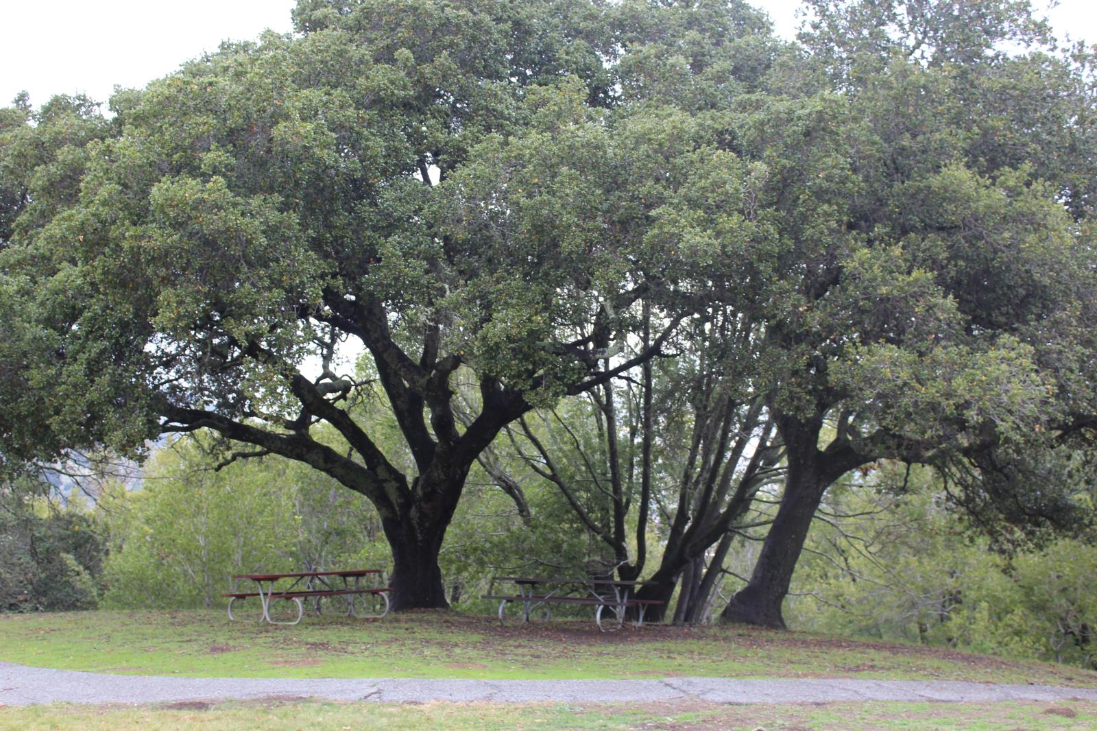 Picture of Marin Highlands Picnic Tables