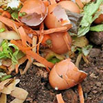 Image of composting