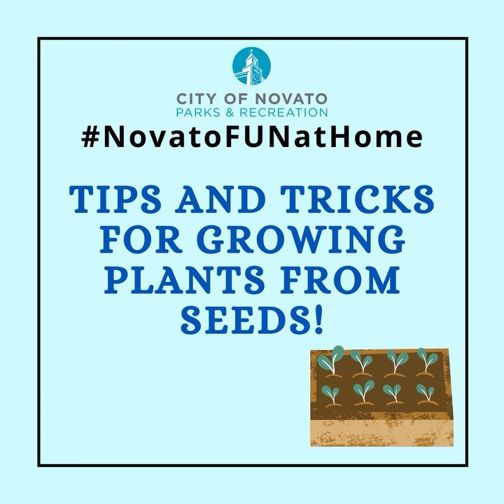 Plants from Seeds novatofunathome